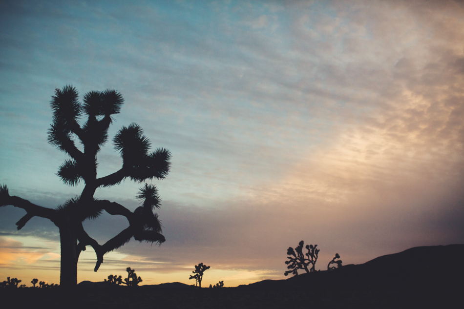 Joshua Tree Love ©Anne-Claire Brun050