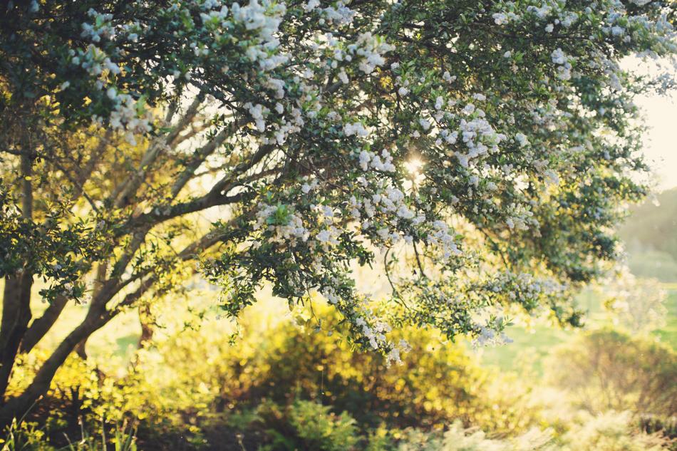 Barn wedding Bolinas - Mann Family Farm ©Anne-Claire Brun0002