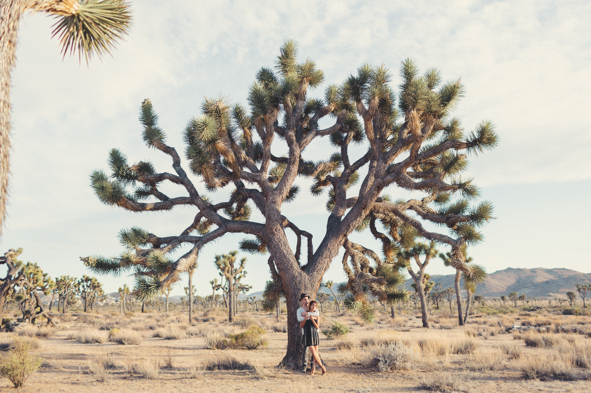 Joshua Tree Engagement Session @Anne-Claire Brun -16