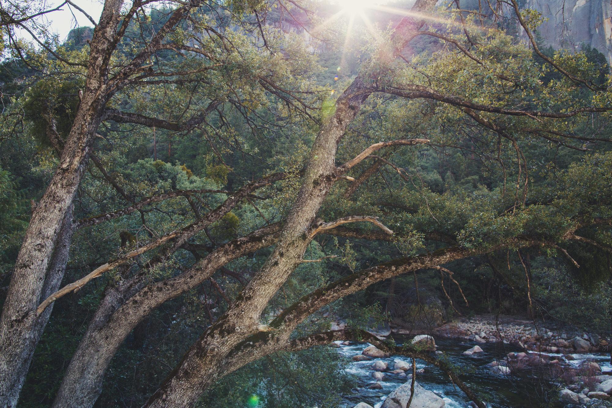 Yosemite ©Anne-Claire Brun 10