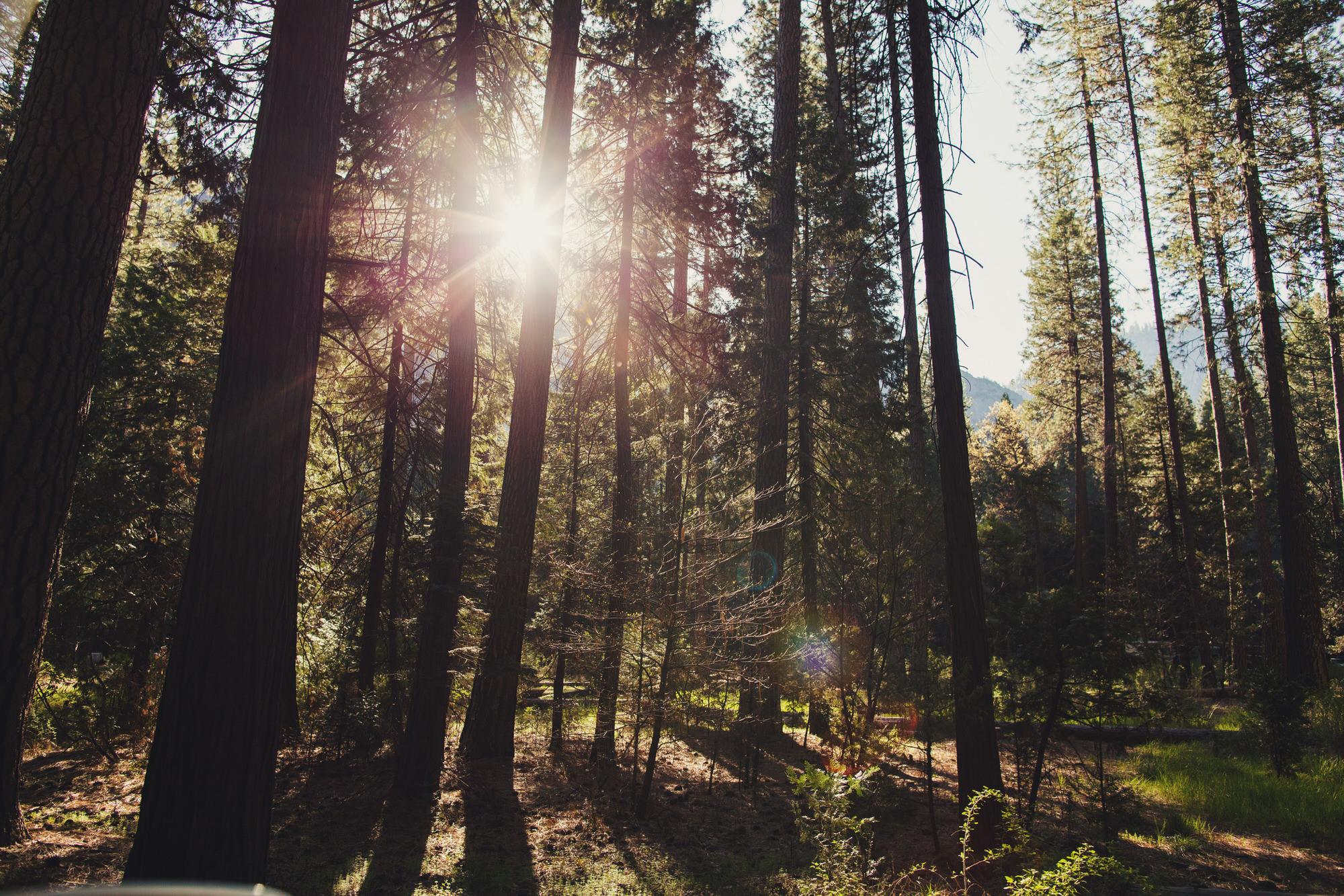 Yosemite ©Anne-Claire Brun 15
