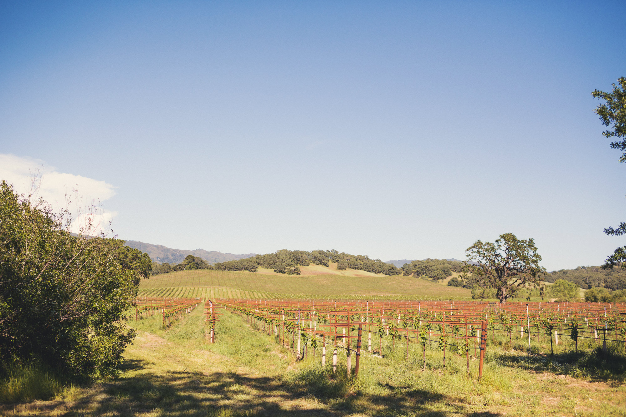 Wedding in Campovida @Anne-Claire Brun 88