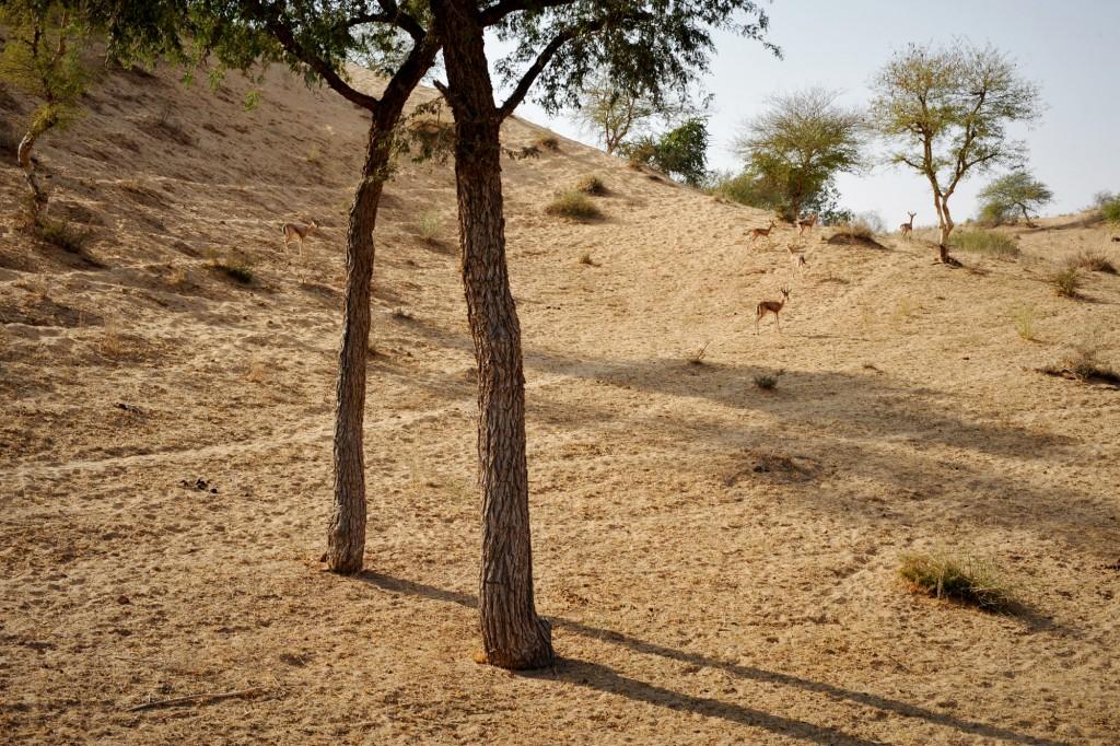 india ©Anne-Claire Brun 62