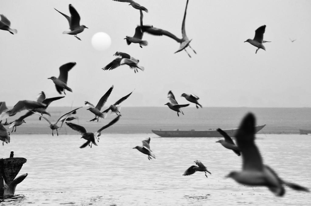 india ©Anne-Claire Brun 99