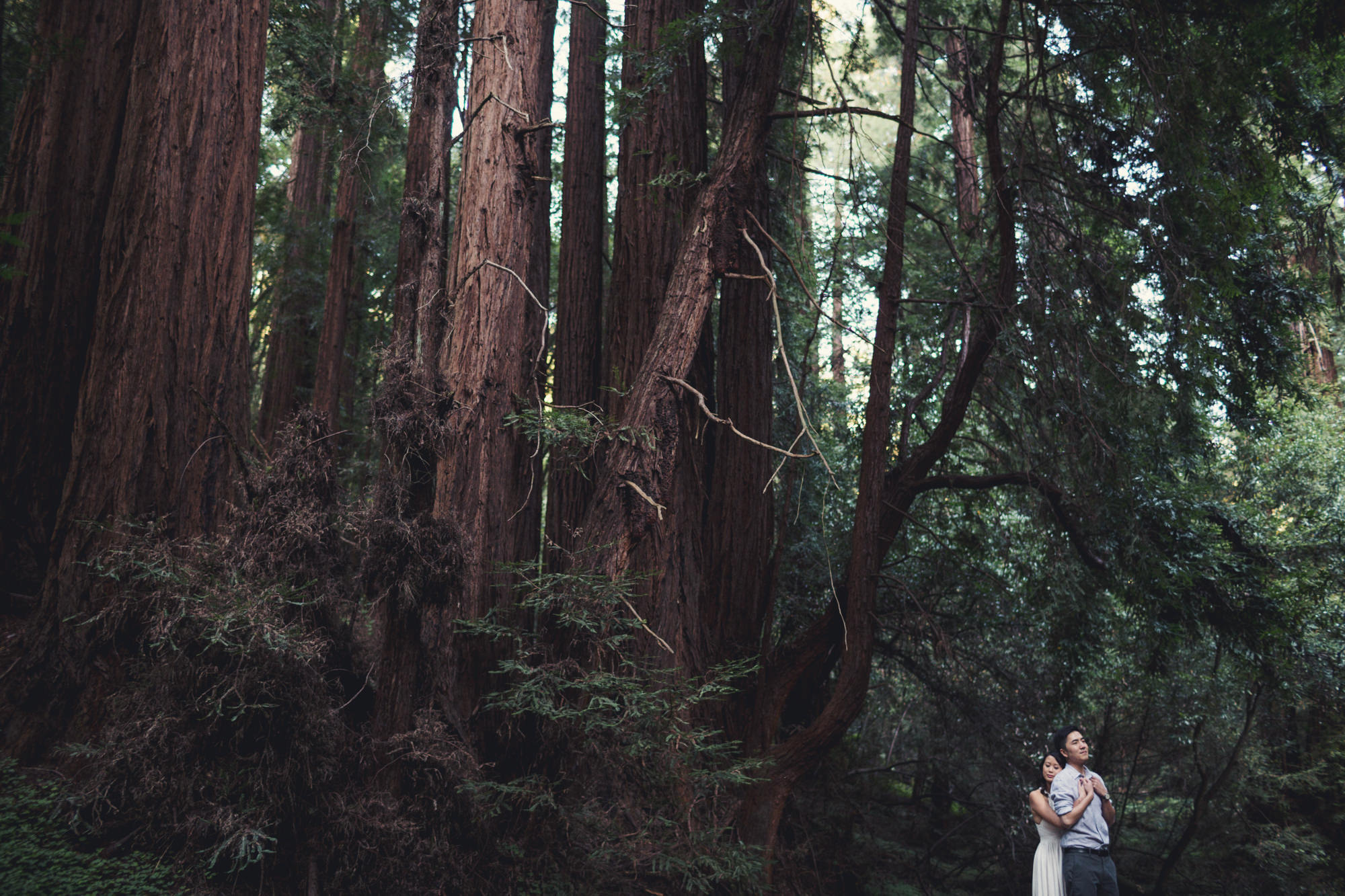 Engagement photos in Muir Woods @Anne-Claire Brun 044