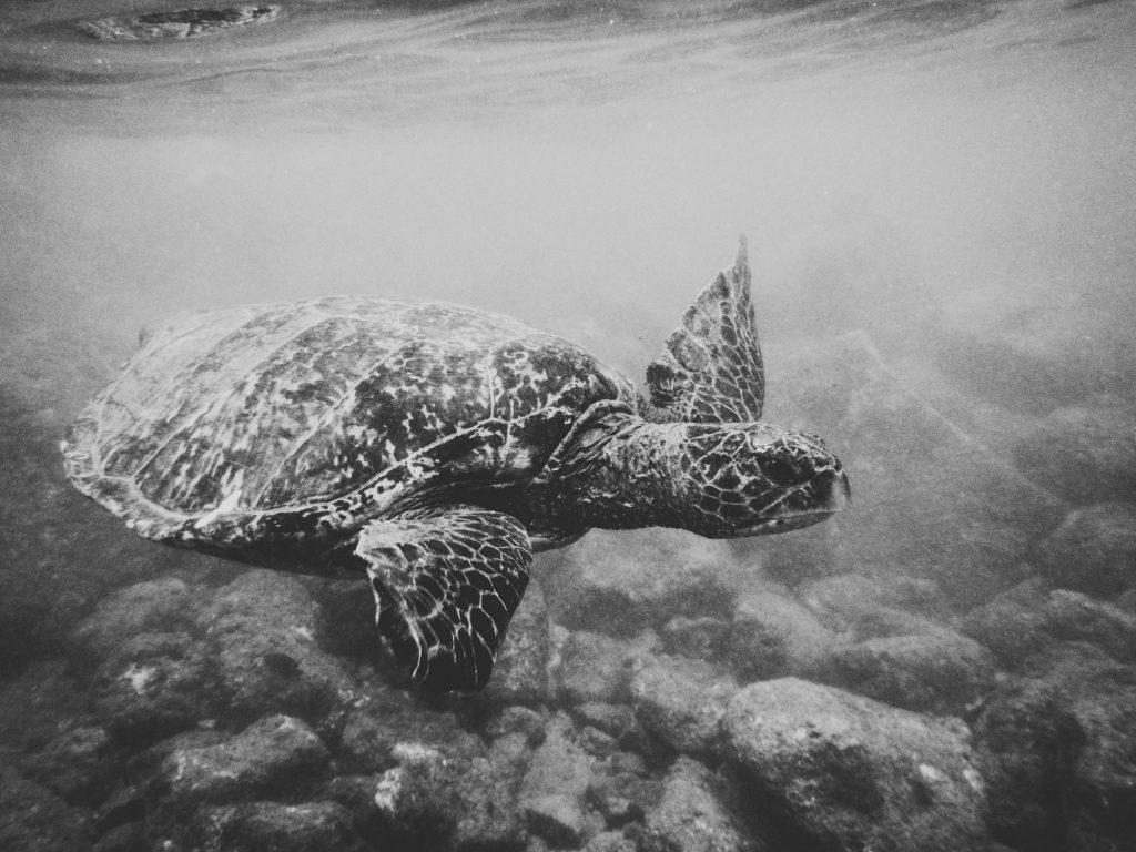 Hawaii Wedding Photographer @Anne-Claire Brun 008