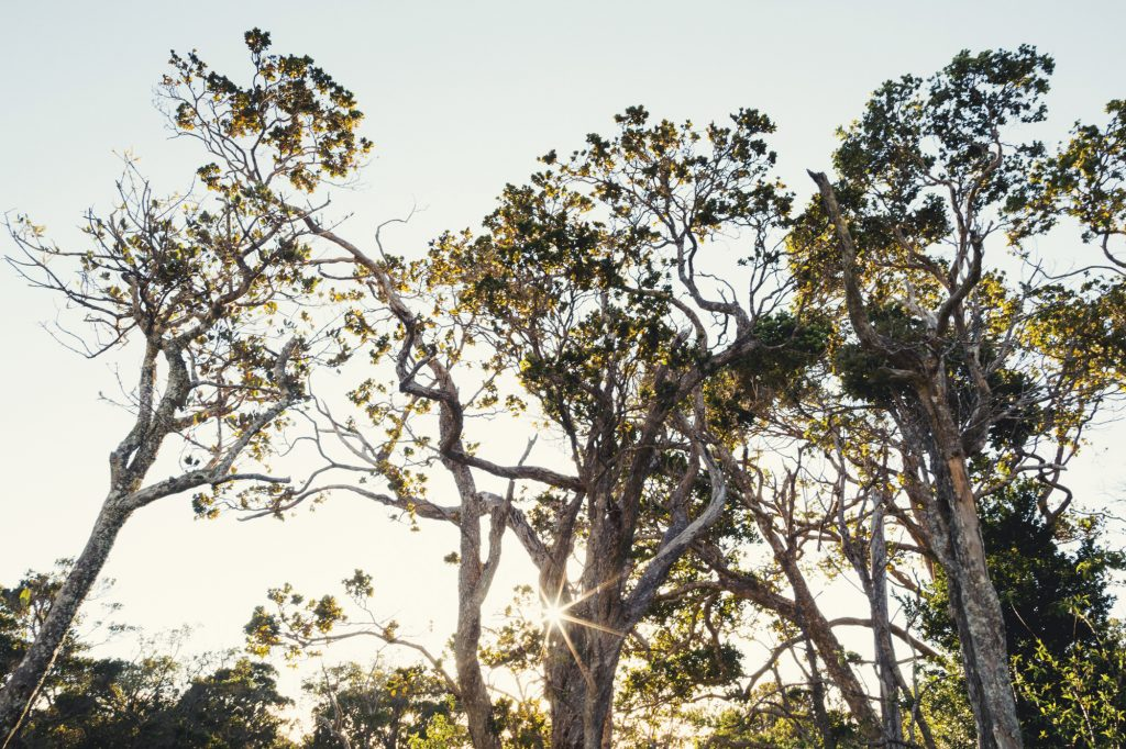 Hawaii Wedding Photographer @Anne-Claire Brun 017