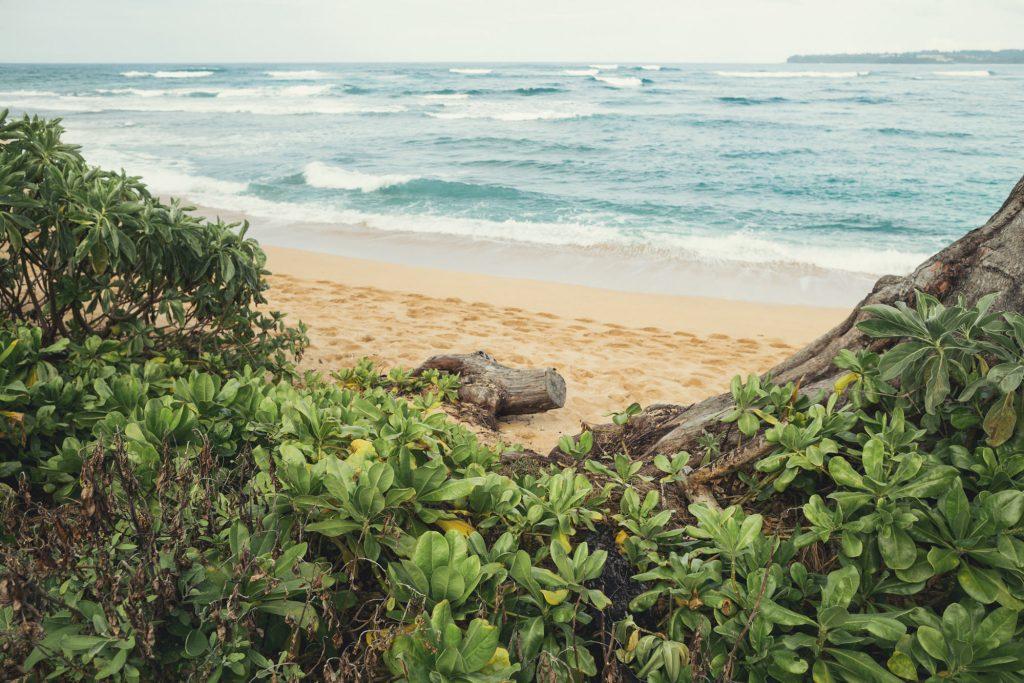 Hawaii Wedding Photographer @Anne-Claire Brun 111