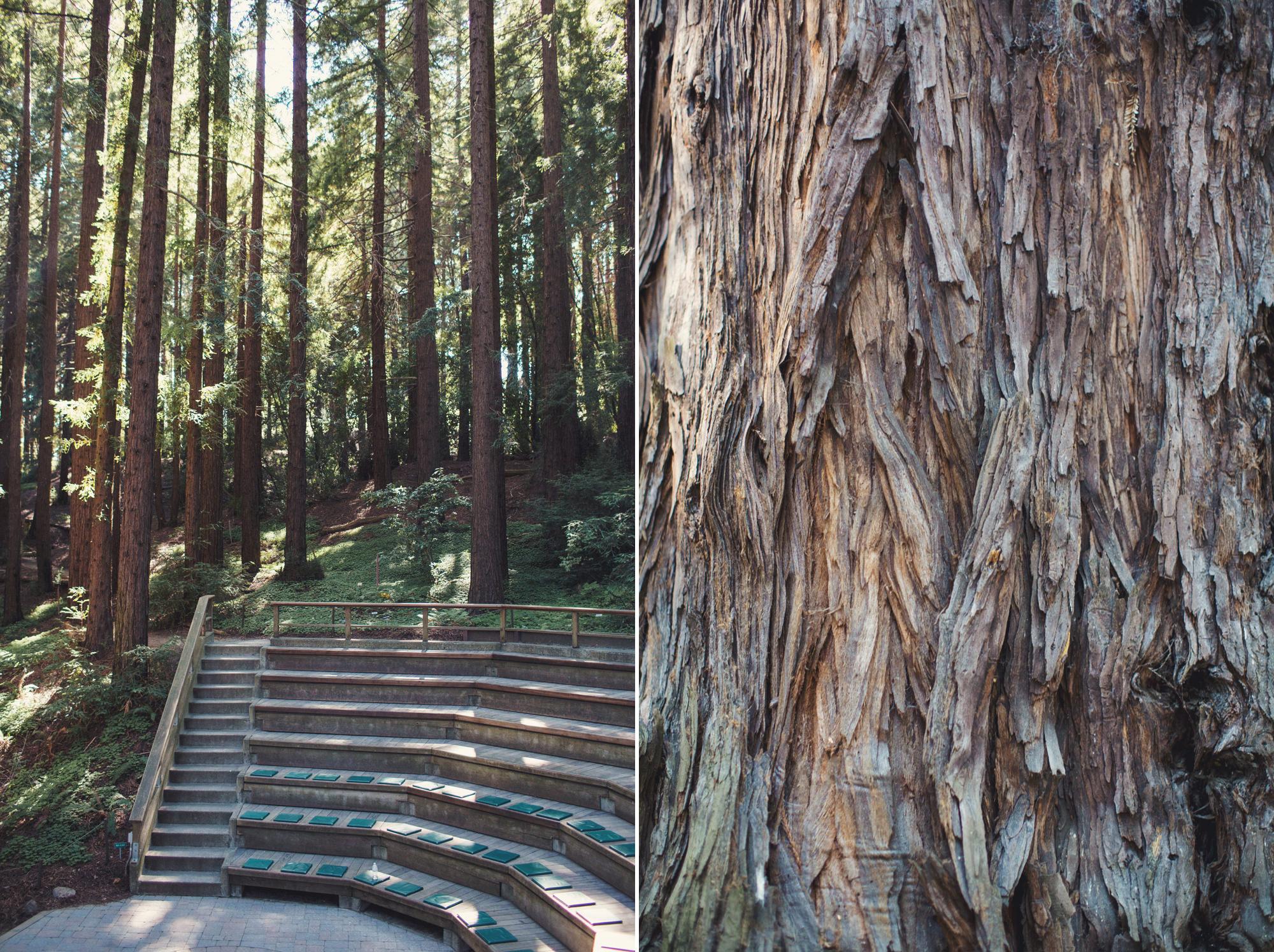 ... Berkeley Botanical Garden Wedding ©Anne Claire Brun 0020 ...