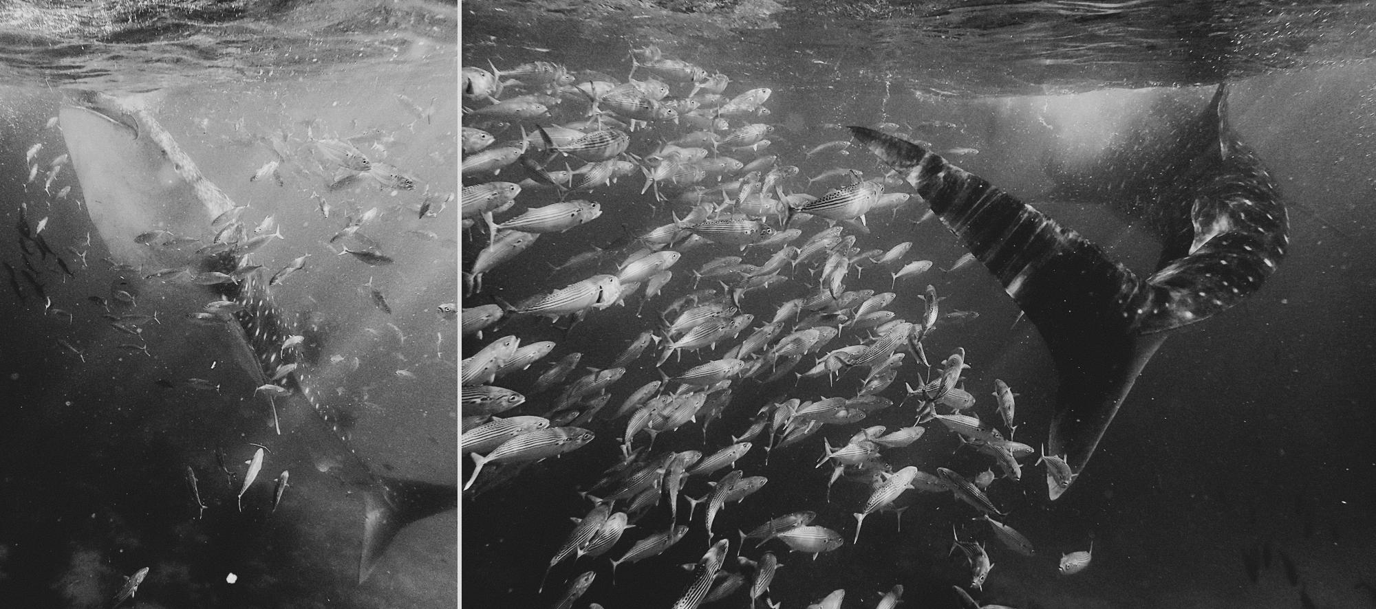 Underwater photography @AnneClaireBrun.com