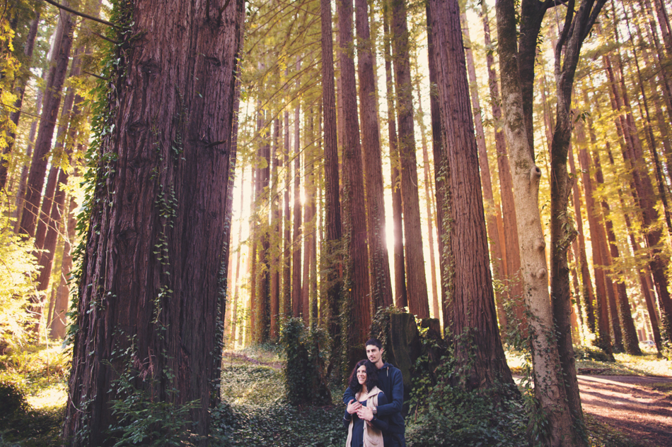 Engagement pictures in redwood ©Anne-Claire Brun002
