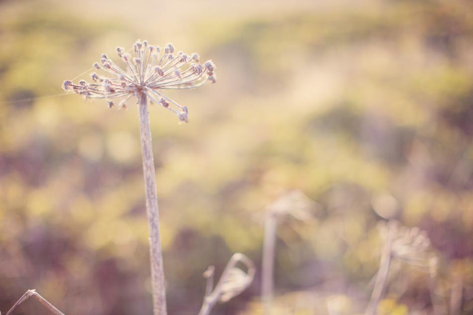 Love in Sonoma County ©Anne-Claire Brun020