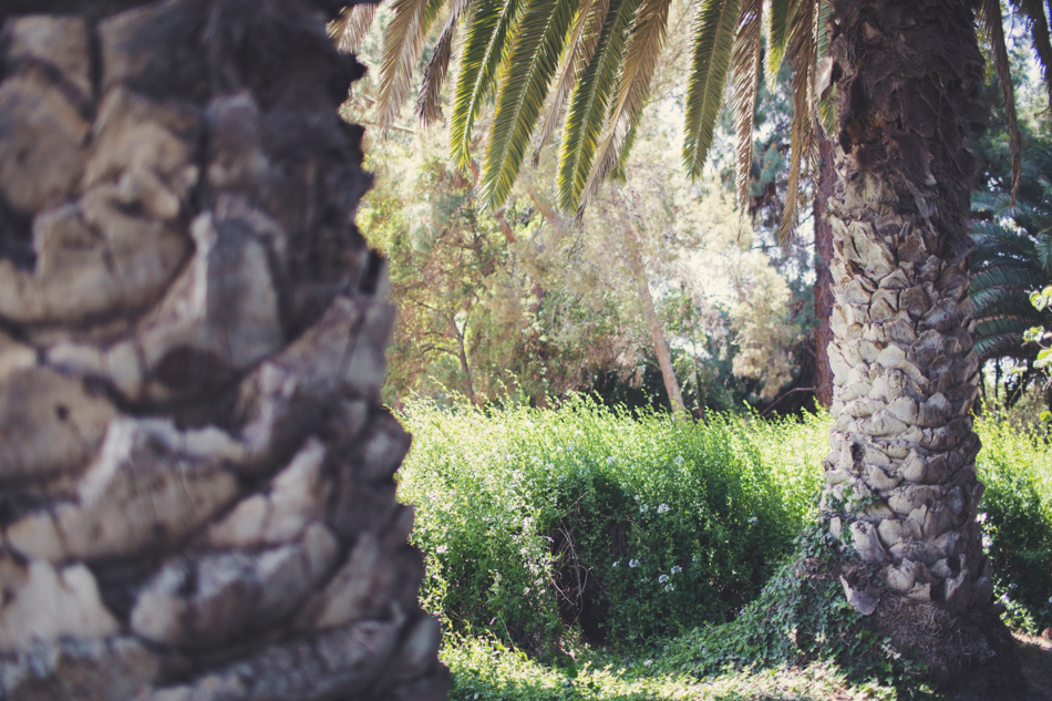 McCormick Ranch Wedding - Los Angeles ©Anne-Claire Brun 0008