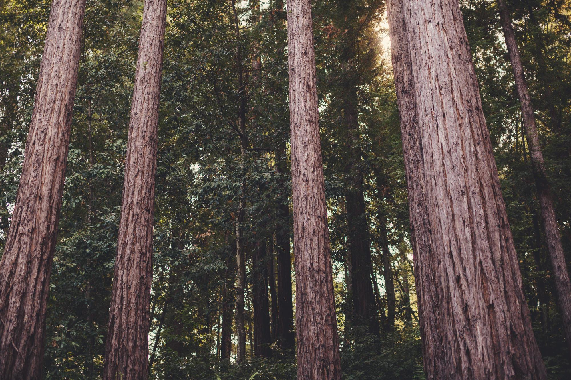 Sequoia Retreat Center Wedding@Anne-Claire Brun 01