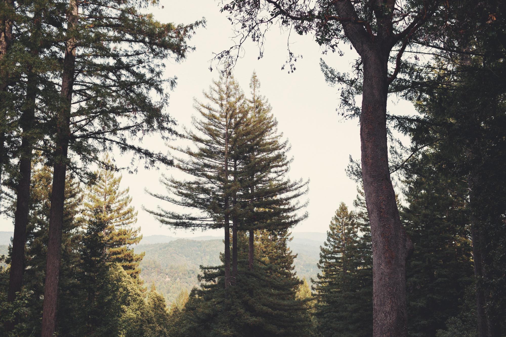 Sequoia Retreat Center Wedding@Anne-Claire Brun 162
