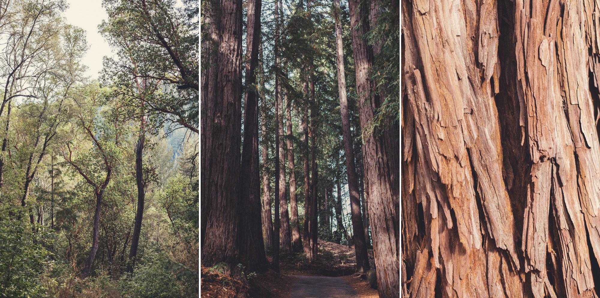 Sequoia Retreat Center Wedding@Anne-Claire Brun 31