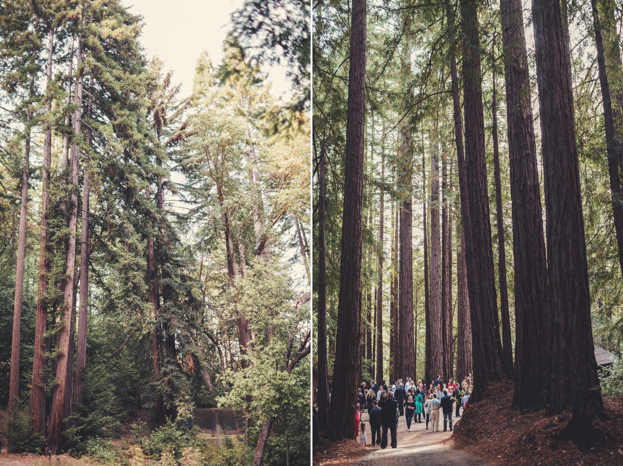 Sequoia Retreat Center Wedding@Anne-Claire Brun 39