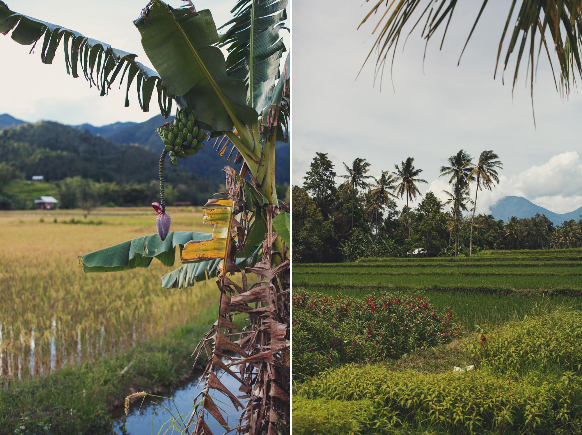 A Taste of Asia ©Anne-Claire Brun 53