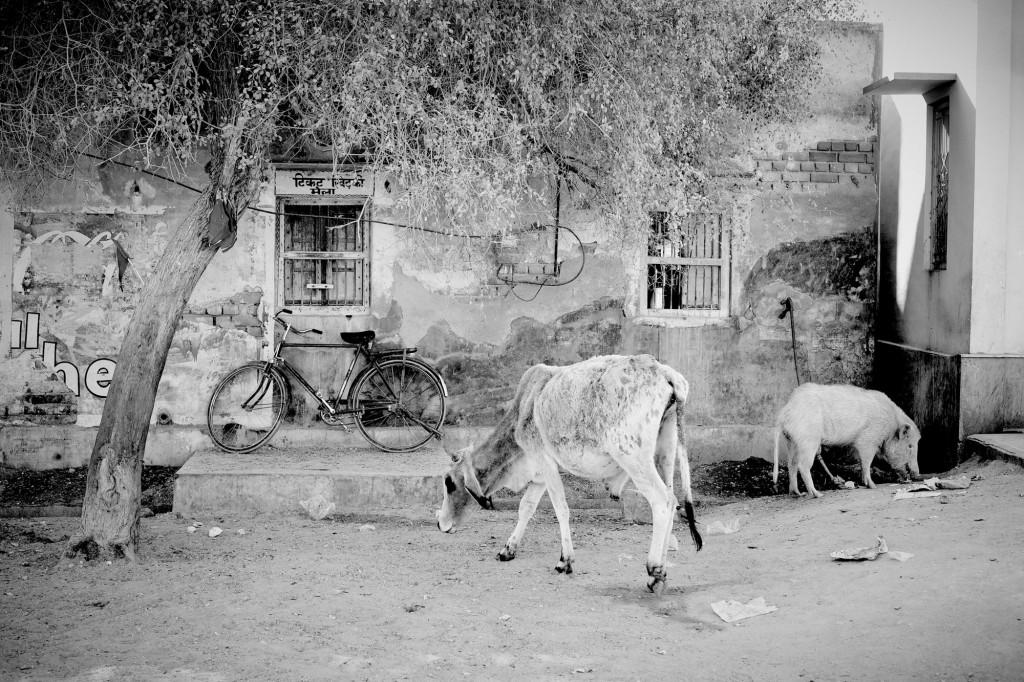 india ©Anne-Claire Brun 25