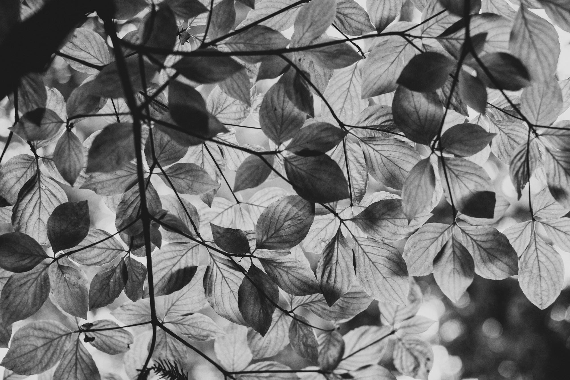 Berkeley Botanical Garden Wedding ©Anne-Claire Brun 0015