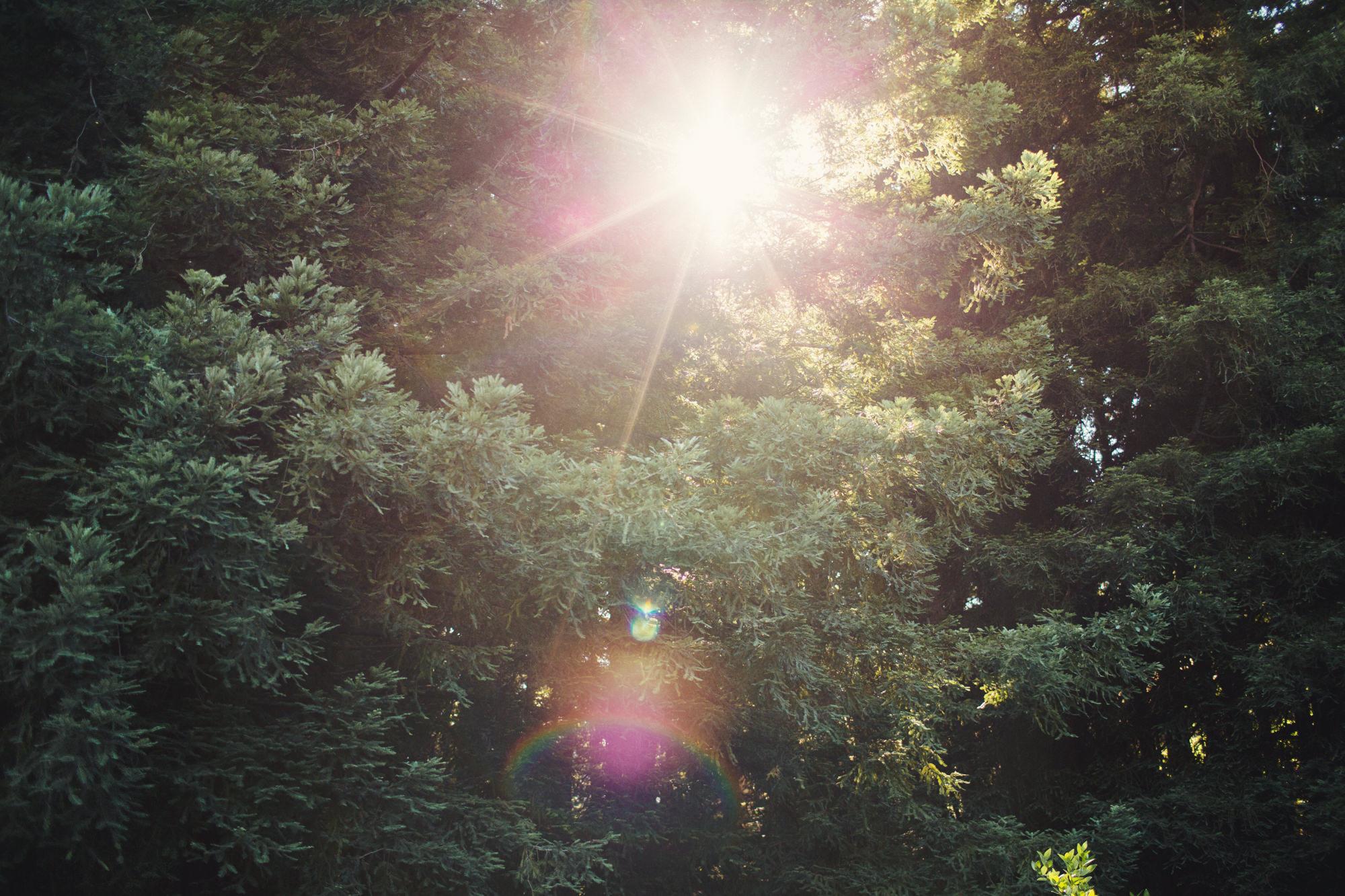 Berkeley Botanical Garden Wedding ©Anne-Claire Brun 0018