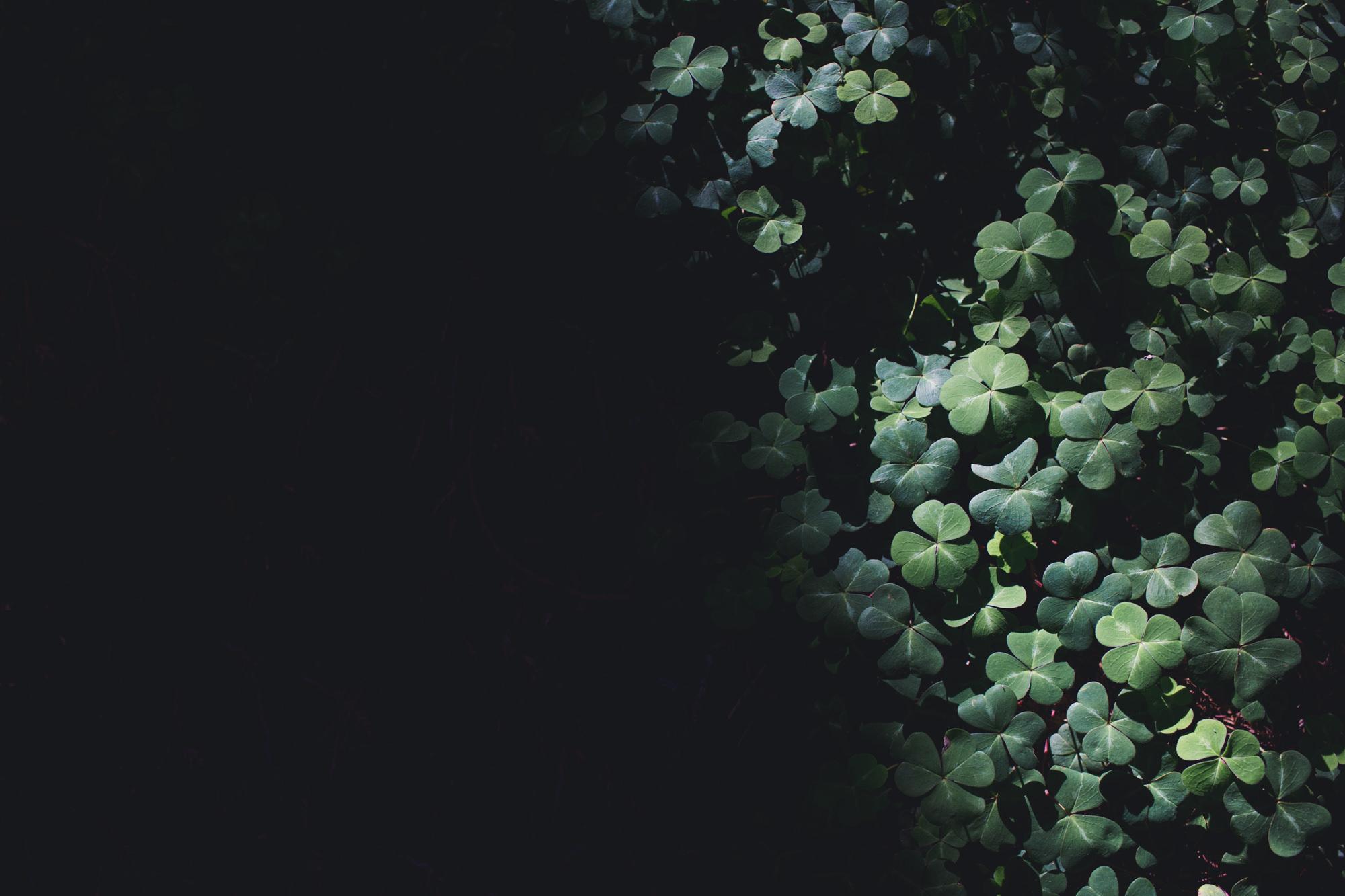 Berkeley Botanical Garden Wedding ©Anne-Claire Brun 0021