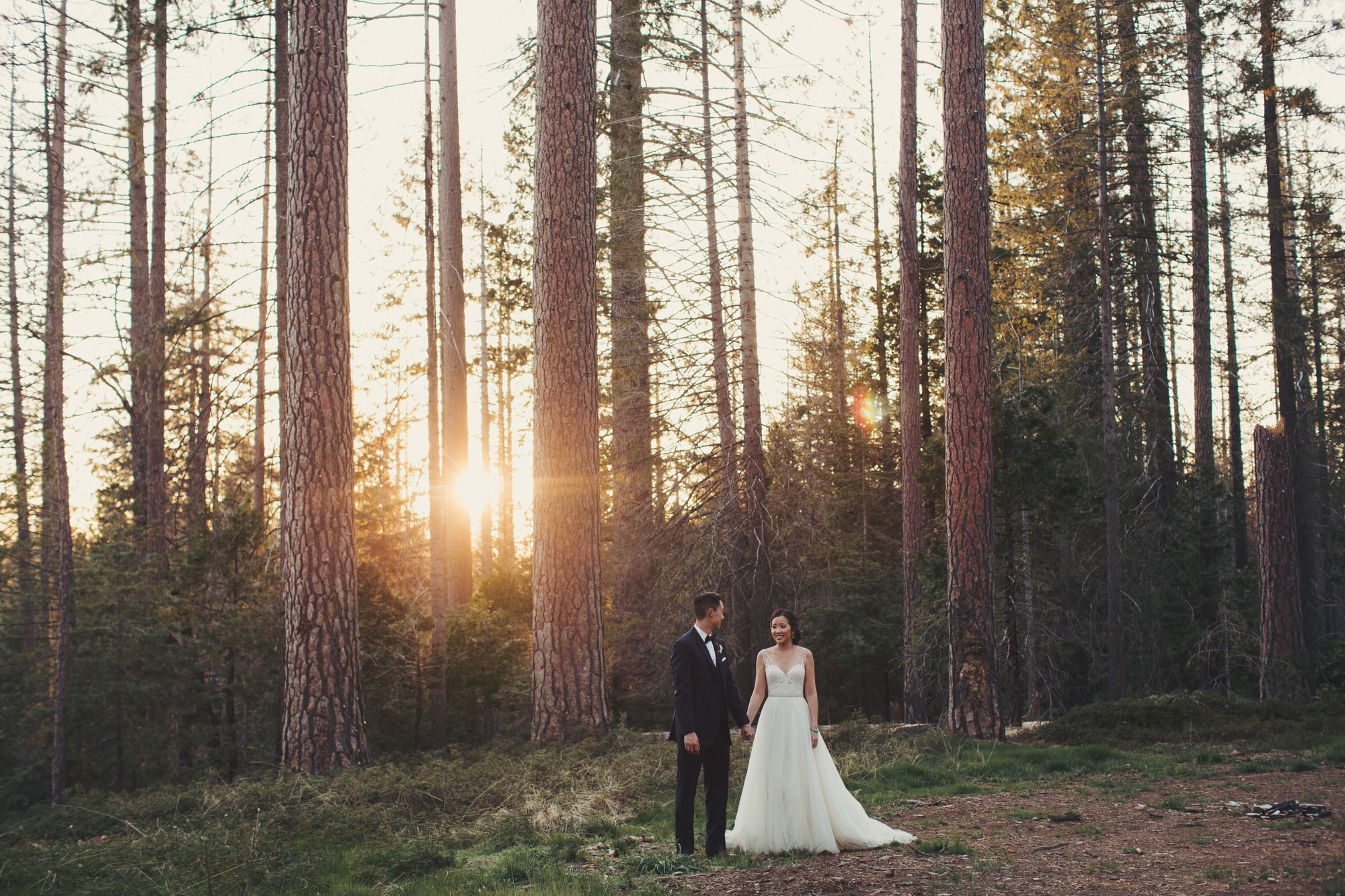trees wedding forest