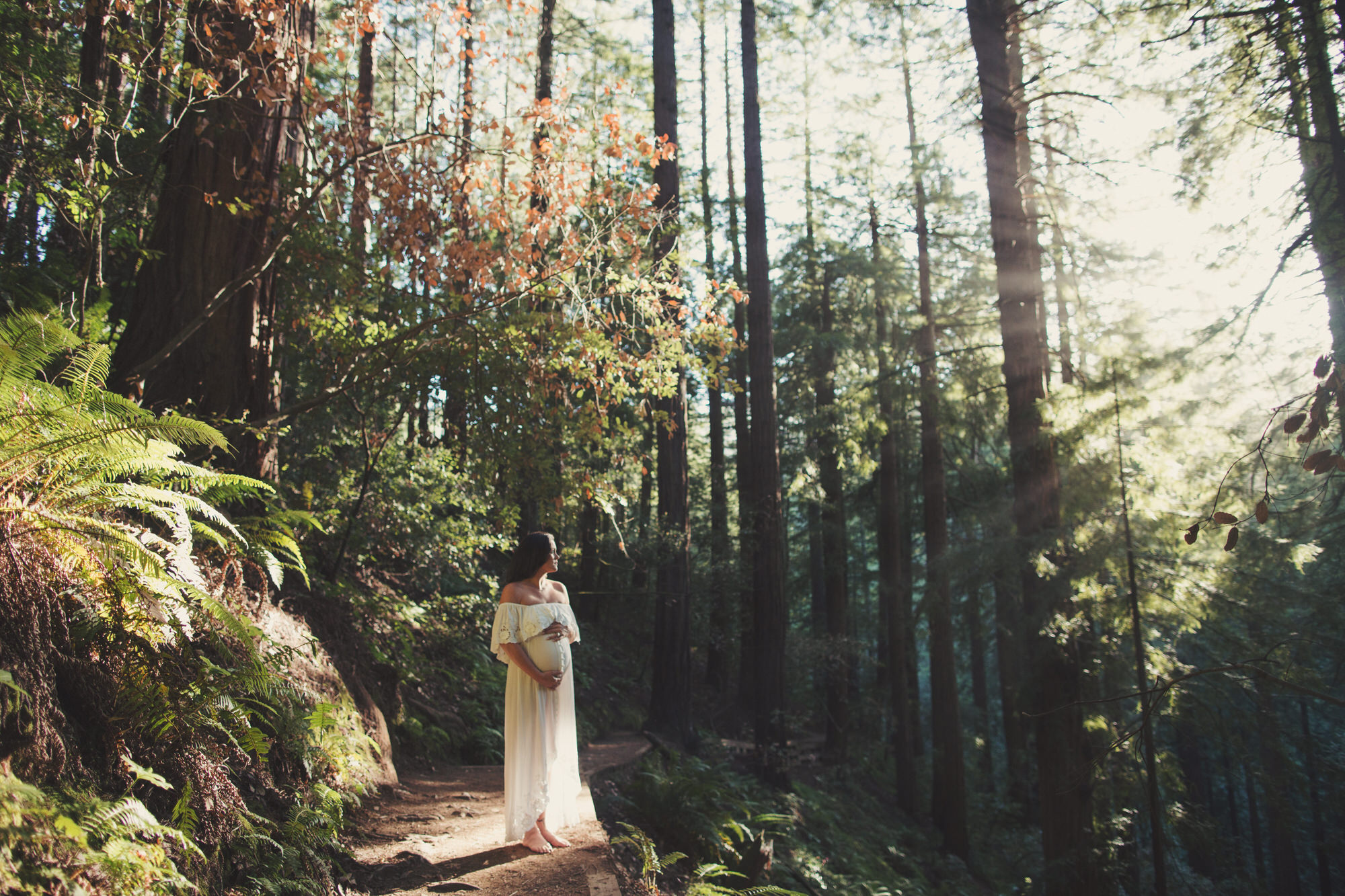 Muir Woods Maternity shoot