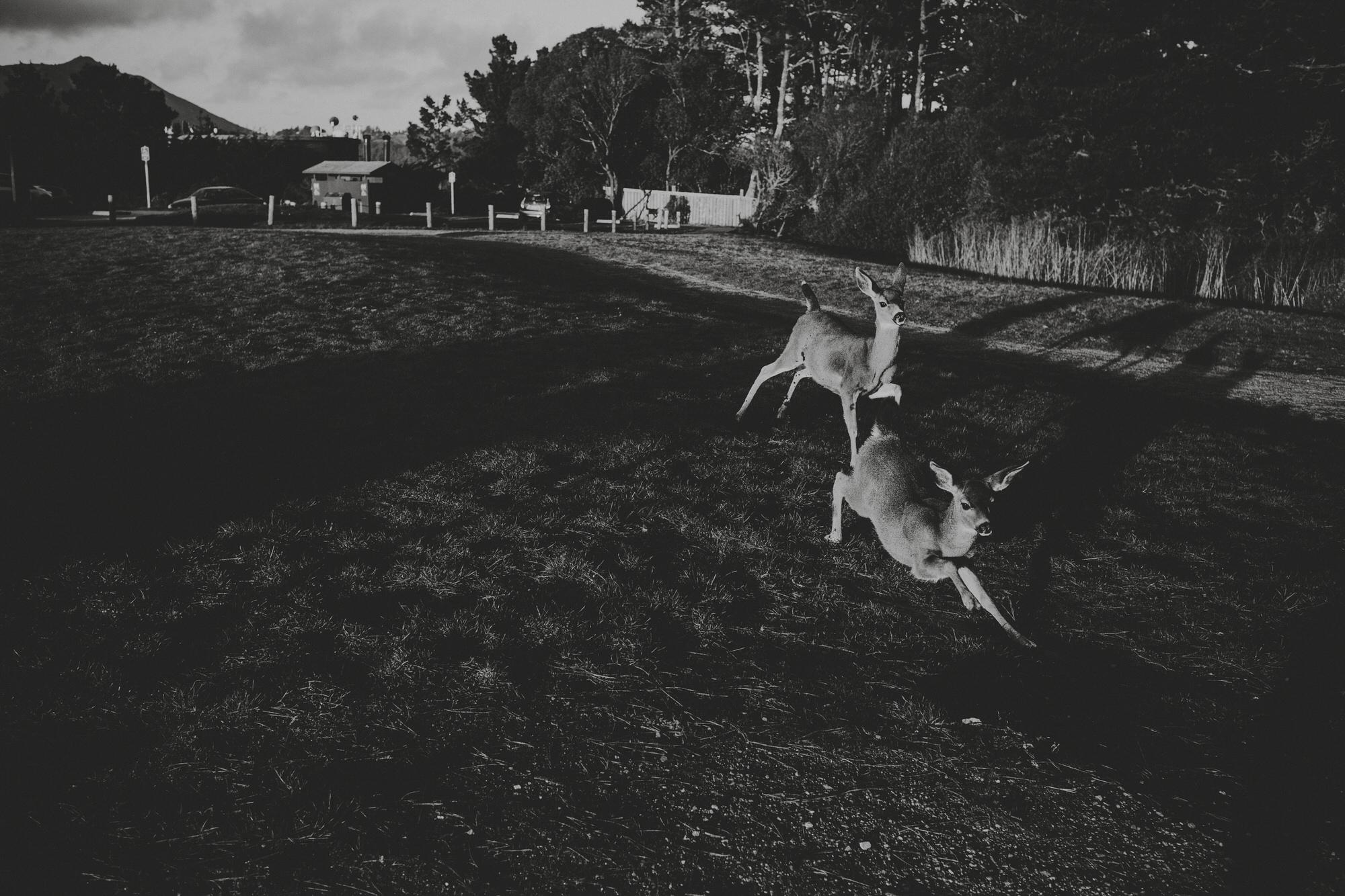 Deers in Muir Woods - Muir Beach Overlook, San Francisco