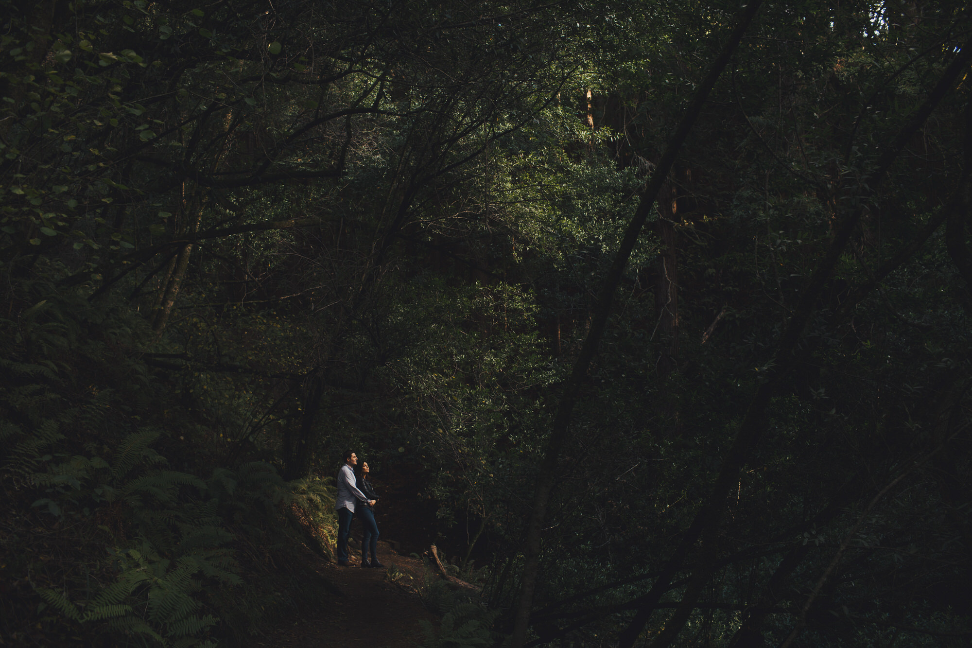 Forest Engagement Photos in Muir Woods